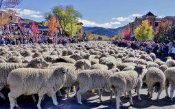 trailing-of-the-sheep-festival-parade-sheep-band-best-credit-carol-waller-2014